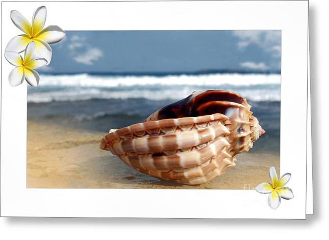 Cone Shells Greeting Cards - Tropical Shell 2 Greeting Card by Kaye Menner