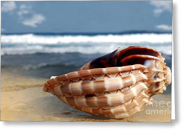 Detailed Shells Greeting Cards - Tropical Shell Greeting Card by Kaye Menner