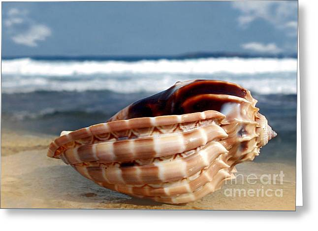 Tropical Shell Greeting Card by Kaye Menner