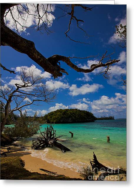 Tropical Shores Greeting Card by Andrew Wood