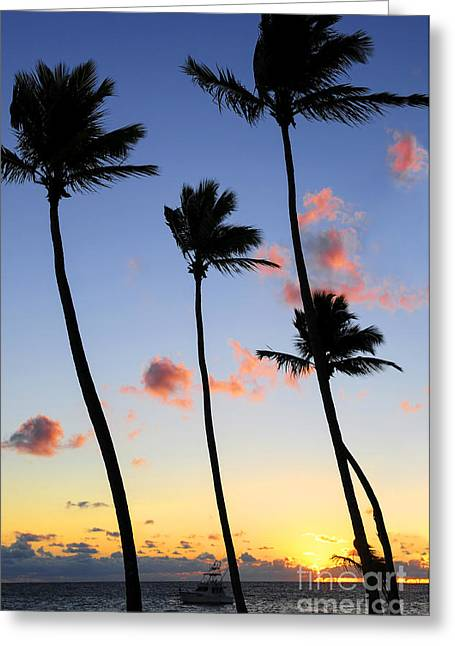 Caribbean Island Greeting Cards - Tropical sunrise Greeting Card by Elena Elisseeva