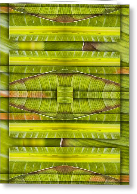Bird Of Paradise Greeting Cards - Tropical Three Greeting Card by Carol Leigh