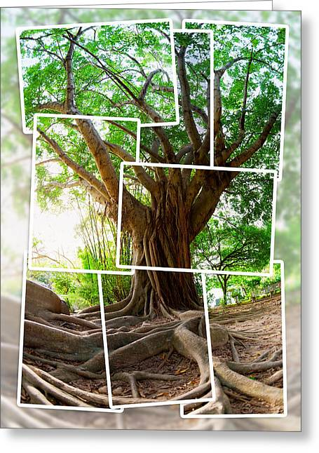 Tree Roots Greeting Cards - Tropical tree Greeting Card by Alexey Stiop
