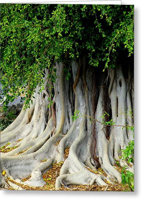 Tree Roots Photographs Greeting Cards - Tropical Tree Greeting Card by Lori Seaman