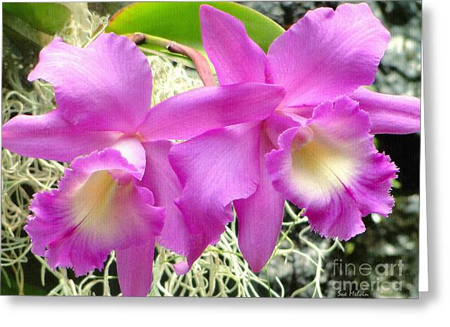 Cattleya Greeting Cards - Tropical Twins Greeting Card by Sue Melvin