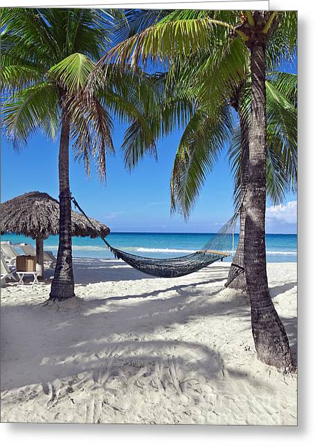 Hammock Greeting Cards - Tropical Vacation Greeting Card by Brandon Alms