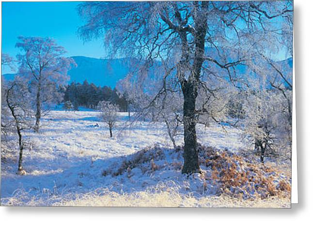 Snowy Day Greeting Cards - Trossachs National Park, Scotland Greeting Card by Panoramic Images