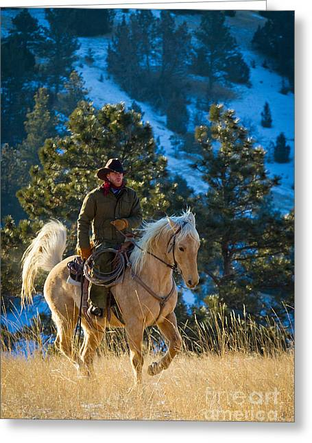 Snowy Day Greeting Cards - Trotting Palomino Greeting Card by Inge Johnsson