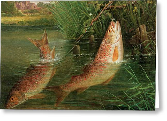 Pastimes Greeting Cards - Trout At Winchester Greeting Card by Valentine Thomas Garland