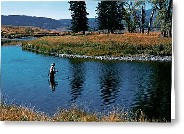 Fishing Creek Greeting Cards - Trout Fisherman Slough Creek Greeting Card by Panoramic Images