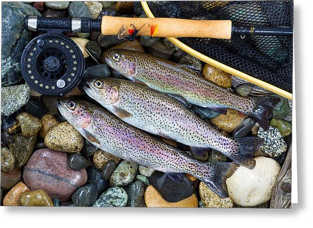 Rainbow Trout Greeting Cards - Trout Fishing Success  Greeting Card by Tom  Baker