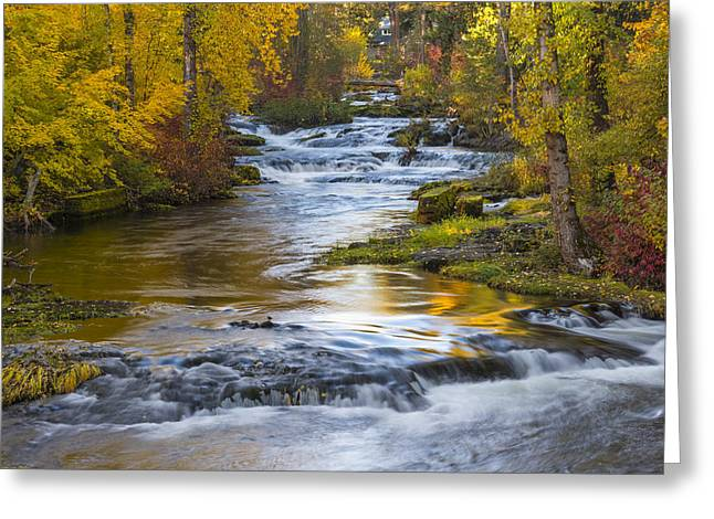 Golden Trout Greeting Cards - Trout Lake Creek Autumn Greeting Card by Greg Vaughn