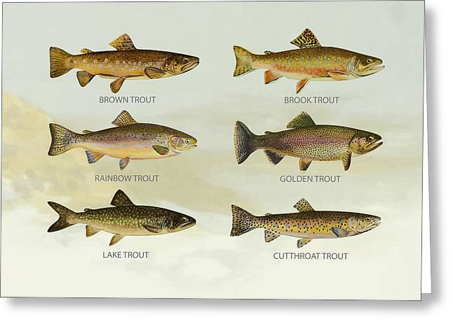 Salmon Digital Greeting Cards - Trout Species Greeting Card by Aged Pixel