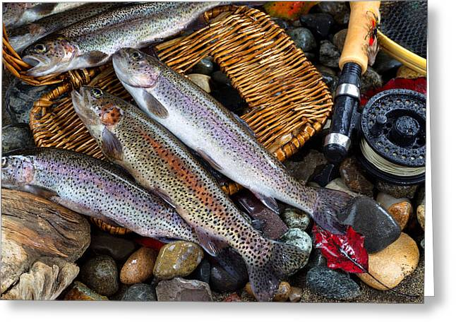 Rainbow Trout Greeting Cards - Trout Spilling out of Creel Greeting Card by Tom  Baker