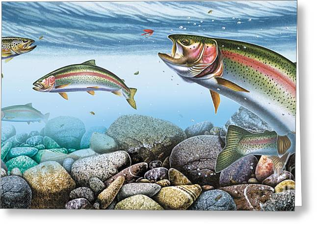 Recently Sold -  - Rainbow Trout Greeting Cards - Trout Stream Greeting Card by JQ Licensing