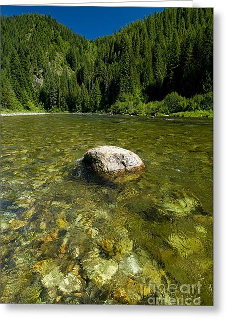 Kelly Photographs Greeting Cards - Trout Stream, Kelly Creek Greeting Card by William H. Mullins