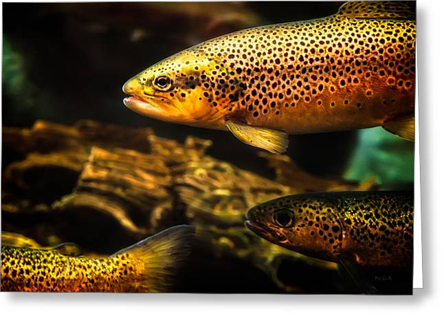 Decorative Fish Greeting Cards - Trout swiming in a River Greeting Card by Bob Orsillo