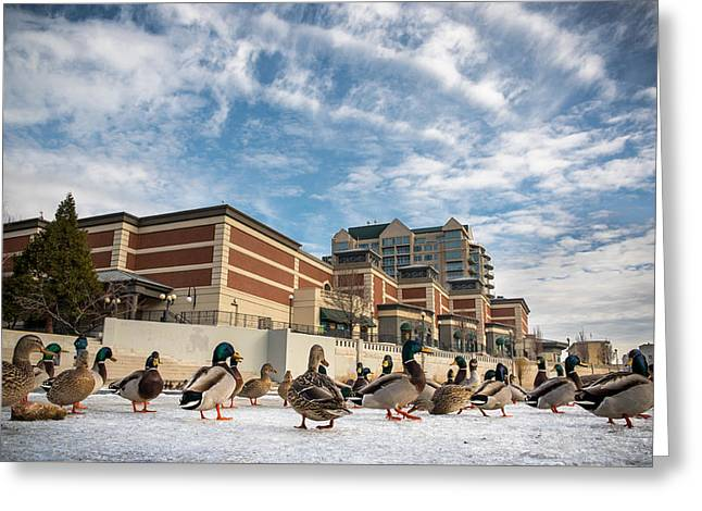 Washoe County Greeting Cards - Truckee Ducks Greeting Card by Tony Fuentes