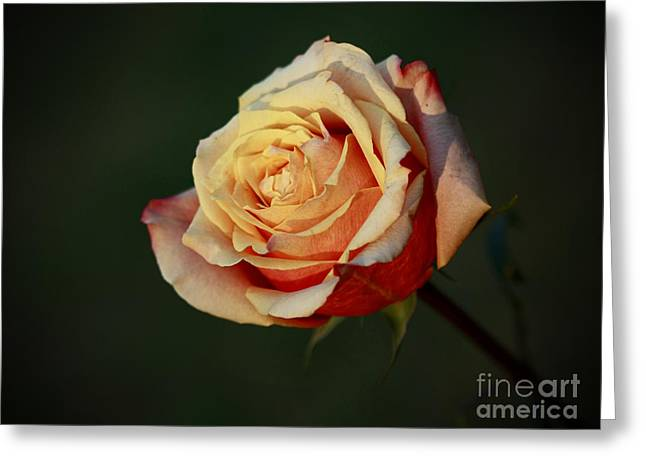 Shelley Myke Greeting Cards - True Beauty Greeting Card by Inspired Nature Photography By Shelley Myke