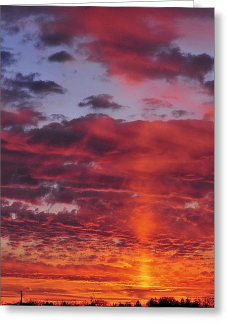 True Colors Greeting Card by Diana Angstadt
