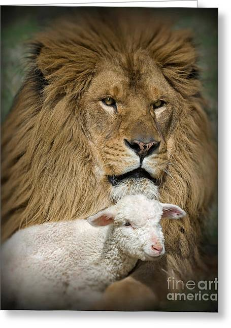Lion And Lamb Greeting Cards - True Companions Greeting Card by Wildlife Fine Art