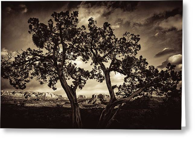 Cathedral Rock Greeting Cards - True Grit Greeting Card by Buffalo Fawn Photography