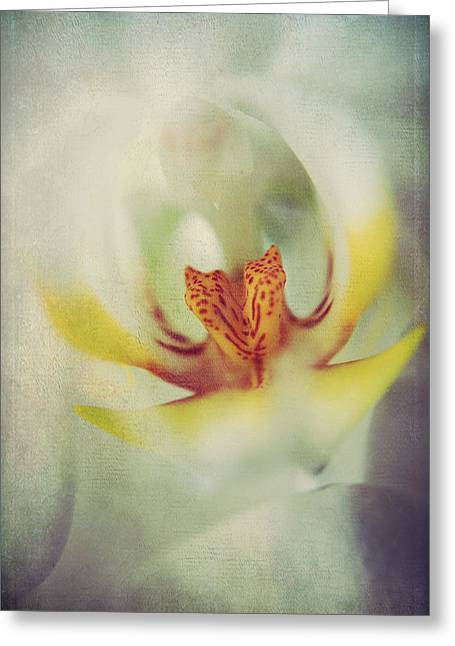 Orchid Greeting Cards - True Greeting Card by Laurie Search