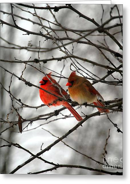 Red Digital Art Greeting Cards - True Love Cardinal Greeting Card by Peggy  Franz