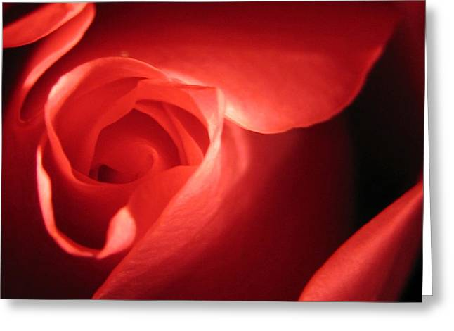 Abstract Roses Greeting Cards - True Love Greeting Card by Tracy Male