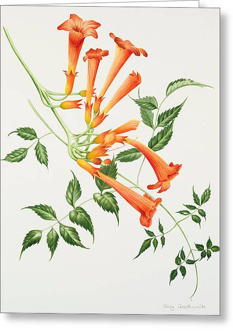 Trumpet Paintings Greeting Cards - Trumpet Greeting Card by Sally Crosthwaite