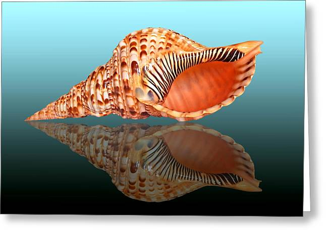 Orange And Brown Designs Greeting Cards - Trumpet Triton Reflection Greeting Card by Gill Billington