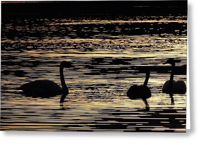 Trumpeter Silhouette Greeting Cards - Trumpeters Greeting Card by Tomas Handfield