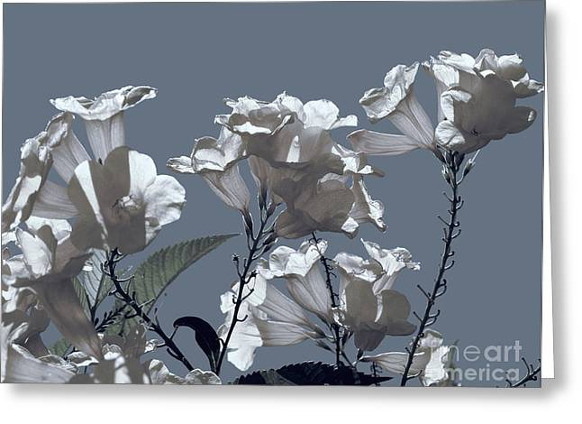 Gunmetal Greeting Cards - Trumpets in Blue Greeting Card by Ted Guhl