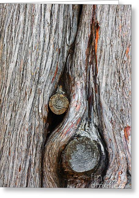 Driftwood Greeting Cards - Trunk Knot Greeting Card by Carlos Caetano