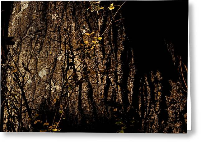 Locations Greeting Cards - Trunk Lichen and Vine Greeting Card by Peter Tellone