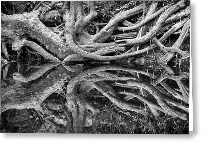 White River Greeting Cards - Trunks On the River Bank Greeting Card by Carolyn Marshall