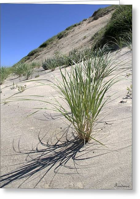 Truro Dunes Greeting Card by Michael Friedman