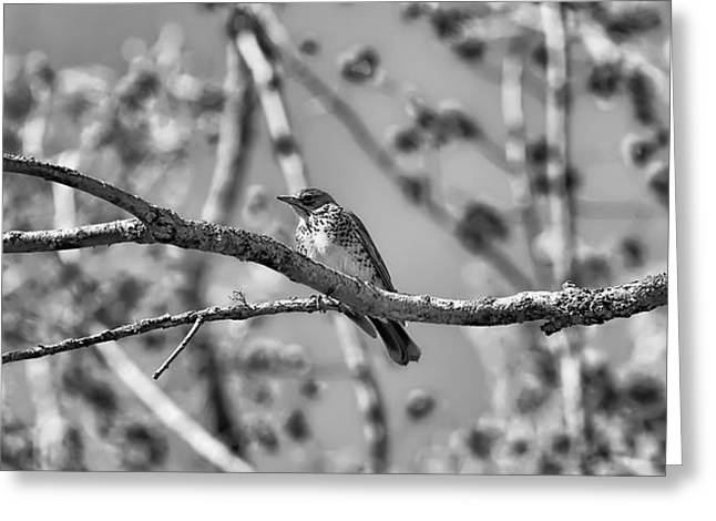 Ble Sky Greeting Cards - Trush on branch BW- Greeting Card by Leif Sohlman