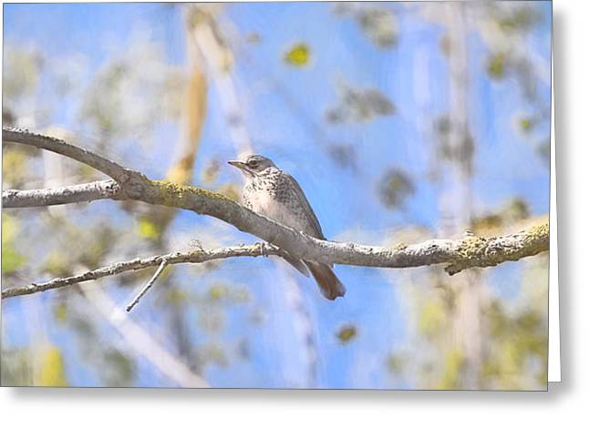 Ble Sky Greeting Cards - Trush on branch IMP-2 Greeting Card by Leif Sohlman