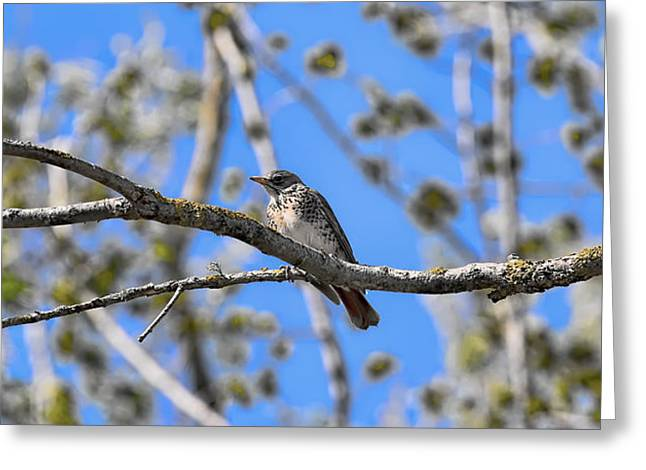 Ble Sky Greeting Cards - Trush on branch - Greeting Card by Leif Sohlman