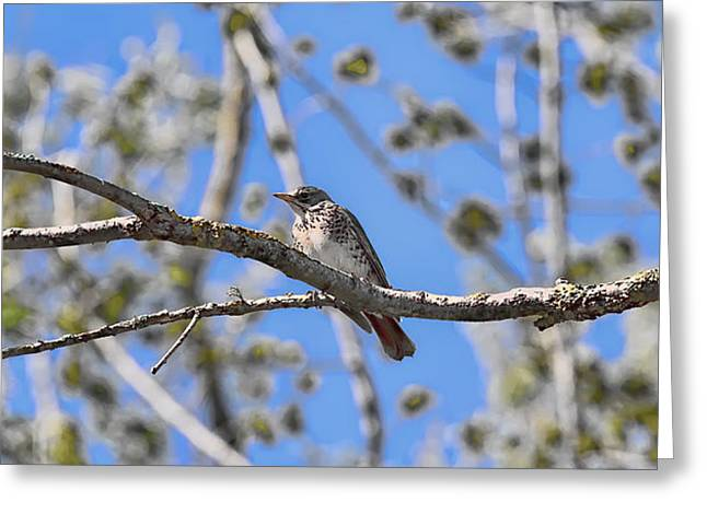 Ble Sky Greeting Cards - Trush on branch-si Greeting Card by Leif Sohlman