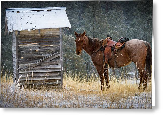 Trusty Horse  Greeting Card by Inge Johnsson