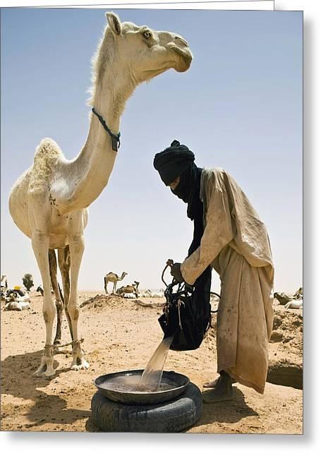 Sahara Sunlight Greeting Cards - Tuareg Nomad Watering Camel, Escarpment Greeting Card by Alberto Arzoz