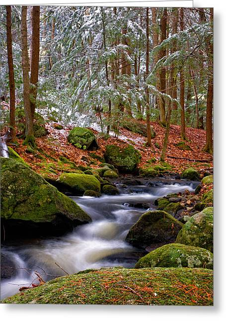 Pine Needles Greeting Cards - Tucker Brook First Snow Greeting Card by Jeff Sinon