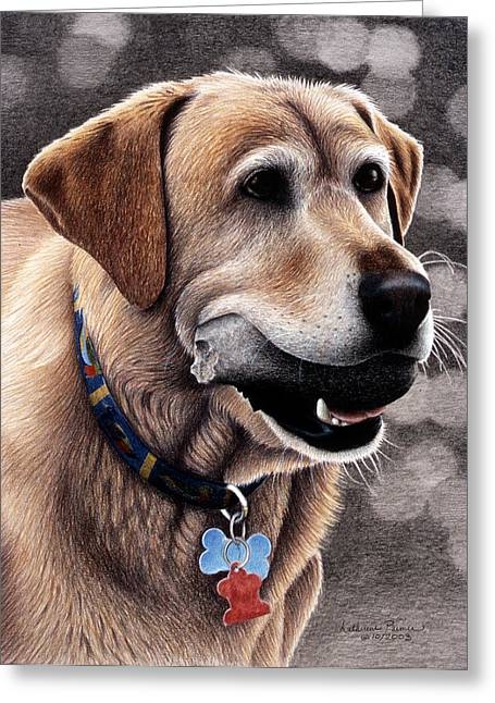 Lab Drawings Greeting Cards - Tucker Greeting Card by Katherine Plumer