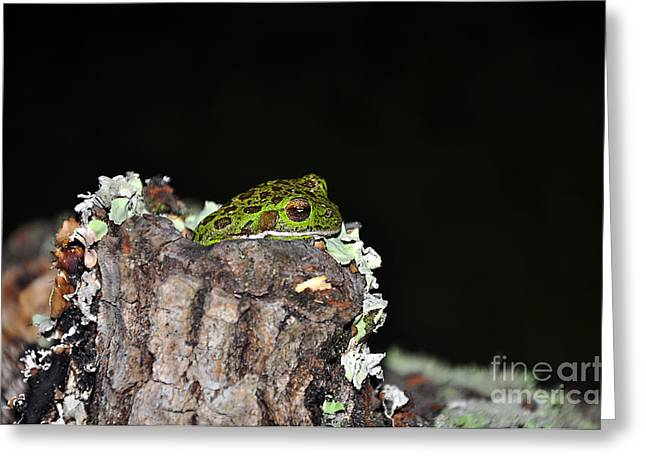 Brown Frog Greeting Cards - Tuckered Tree Frog Greeting Card by Al Powell Photography USA