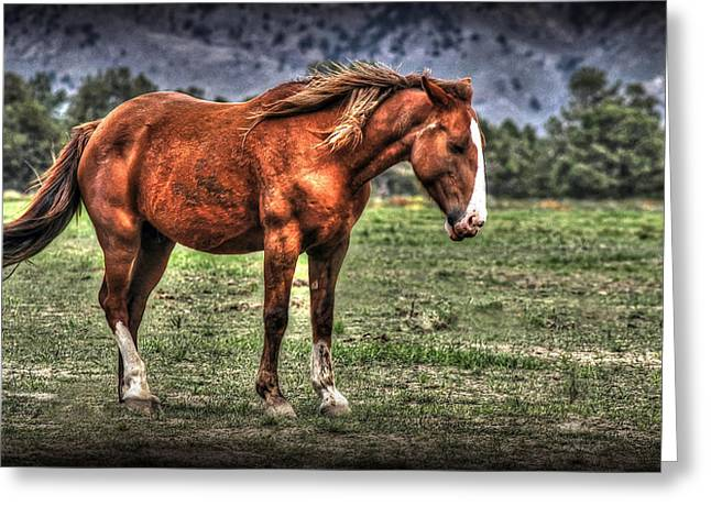 Hdr Landscape Greeting Cards - Tuffy Greeting Card by Craig Incardone