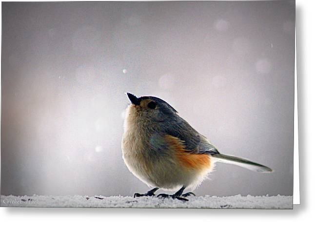 Boone County Greeting Cards - Tufted Titmouse Greeting Card by Cricket Hackmann
