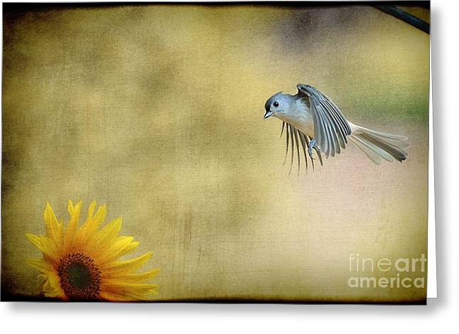 Tufted Titmouse Flying Over Flower Greeting Card by Dan Friend