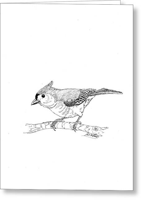Lee Halbrook Greeting Cards - Tufted Titmouse Greeting Card by Lee Halbrook